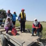Trabajadores de la agroexportación Ica