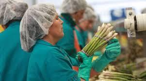 Sobre Seguridad y Salud en el Trabajo hablan los Sindicatos de la Agro exportación.