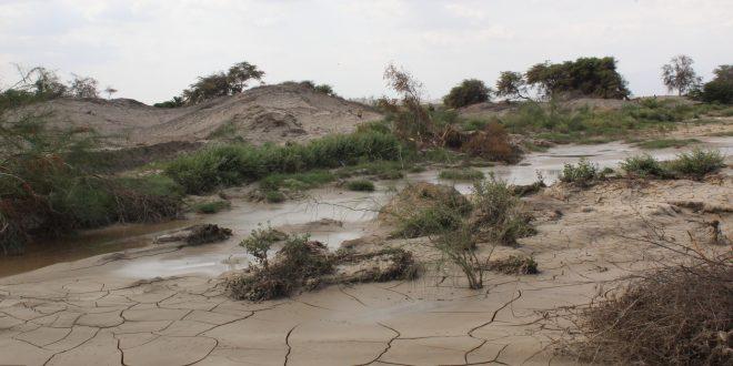 Ocucaje: Huaicos arrasa hectáreas de cultivo de pequeños agricultores