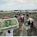 AGROEXPORTACION.ica