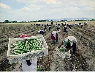 EN TIEMPOS DEL CORONAVIRUS TRABAJADORES DE LA AGROEXPORTACION EXPUESTOS A SU SUERTE MIENTRAS AUTORIDADES JUEGAN AL GRAN BONETON